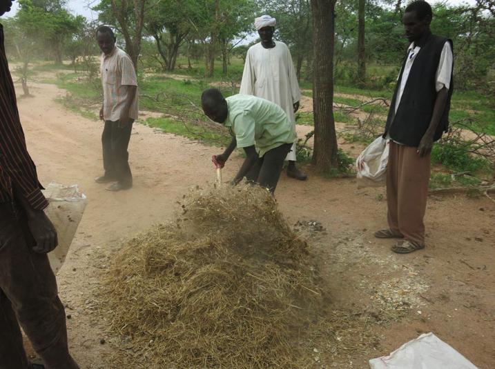 2015_Sudan_Mali_ERESP_pasture seeds prep in Delieg