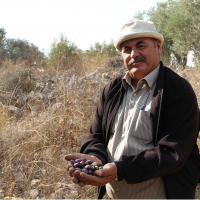 Watch Video: Mohammed, Olive Oil Without Borders Lead Farmer